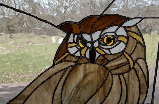 // backyard owl close up