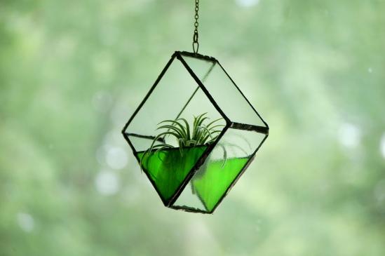 // green terrarium