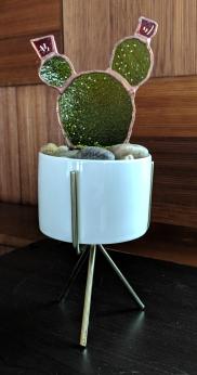// glass cactus