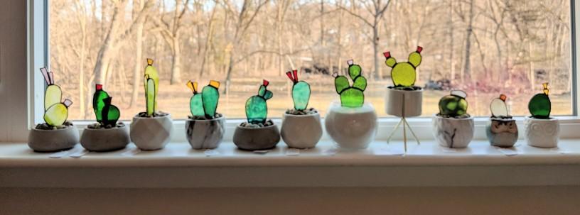 // cactus variety