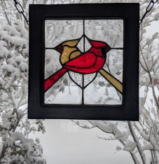 // cardinals in the window